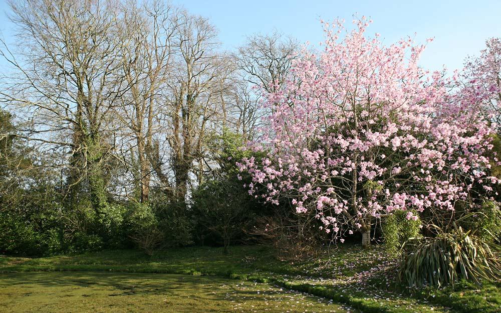 Burncoose-Gardens 4449